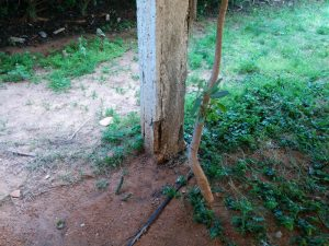 """עמוד כלונס עם סדקים תחת ענף מהדנסים בע""""מ"""
